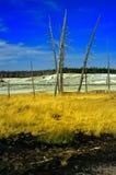 1 ingen yellowstone Royaltyfri Fotografi