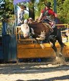 1 jeździec byka Fotografia Royalty Free