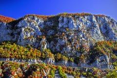 (1) jesień Zdjęcia Stock