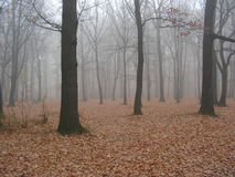 1 jesieni Zdjęcie Stock
