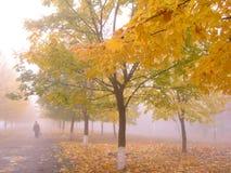 1 jesieni Obraz Stock