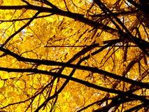 1 jesienią drzewo Fotografia Stock