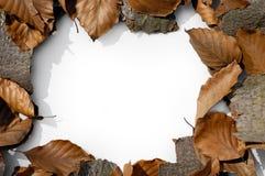 1 jesienią rama Obraz Stock