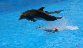 #1.Jumping dolfijn. Stock Foto's