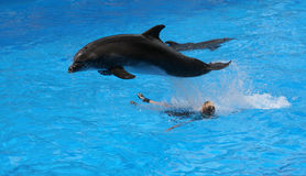 #1.Jumping dolphin. Stock Photos