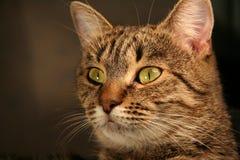 1 katt Royaltyfri Bild