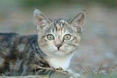 1 katt Arkivbilder
