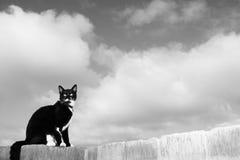 1 katt Arkivbild