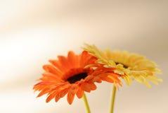 1 konstgjorda blommaserie Royaltyfria Foton