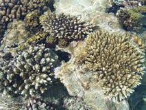 1 korallrev Royaltyfria Foton