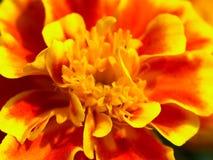 1 kwiat obrazy stock