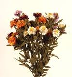 (1) kwiat Obrazy Stock