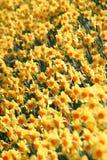 1 kwiaty Obrazy Stock