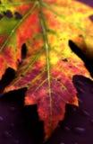 1 leaf arkivfoton