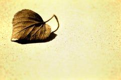 1 leaf Arkivbilder