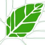 1 leaf Royaltyfri Bild