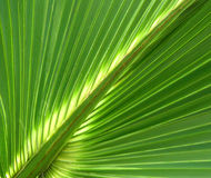 1 leaf gömma i handflatan royaltyfri foto