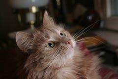 1 leka för katt arkivbild