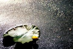 1 lilly μαξιλάρι Στοκ φωτογραφίες με δικαίωμα ελεύθερης χρήσης