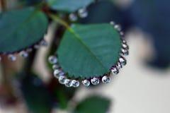1 liten droppeleaf Royaltyfria Bilder