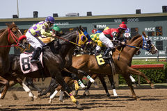 1 lone park races stjärnan Royaltyfria Foton
