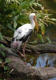 1 målade stork Arkivfoton