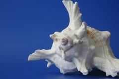 (1) mój seashell Zdjęcia Royalty Free