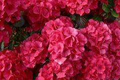 1 maravilhoso de florescência Foto de Stock Royalty Free