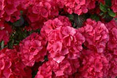 1 merveilleux de floraison Photo libre de droits