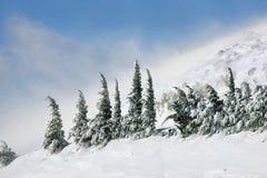 (1) śnieg Fotografia Royalty Free