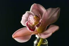 (1) orchidea Fotografia Stock