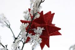 1 ornament Zdjęcia Royalty Free