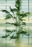 (1) palmy odbicia fotografia stock
