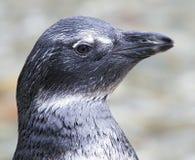 1 penguin μικρό Στοκ Εικόνες