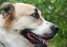 1 pies zdjęcia stock