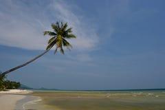 (1) plażowy kokosowy samui Zdjęcia Stock
