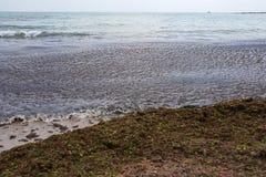 1 polluted приморьо водорослей Стоковое Изображение RF
