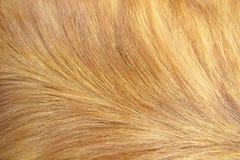 (1) psiego włosy macro Zdjęcia Royalty Free