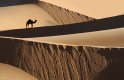 (1) pustynny moroccan zdjęcie royalty free