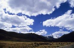1 puya raimondy天空 库存图片