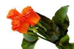 1 róże Obraz Stock