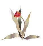 1 röda tulpan Arkivbild