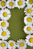 (1) rabatowy kwiat Fotografia Royalty Free