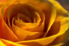 1 romantiker steg Royaltyfria Bilder