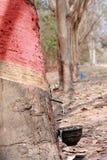 1 rubber knackning för latex Royaltyfria Foton