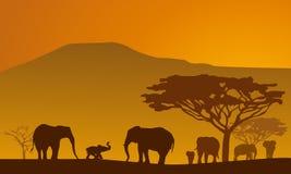 1 safari