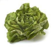 1 salade de plan rapproché Images libres de droits