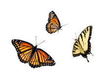1 samling för 3 fjäril Arkivfoto