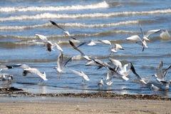 (1) seagulls Zdjęcia Royalty Free
