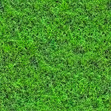 1 seamless modell för 2 gräs Fotografering för Bildbyråer